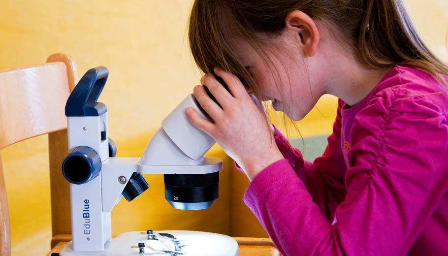 Prora pantoffeltierchen unterm mikroskop u oz ostsee zeitung